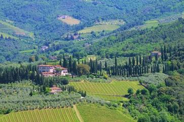 Toskana Weingut - Tuscany vineyard 08