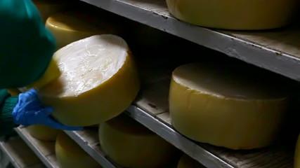 Hard yellow cheese