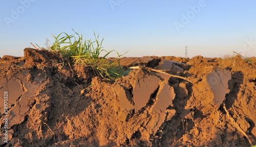 terre arable
