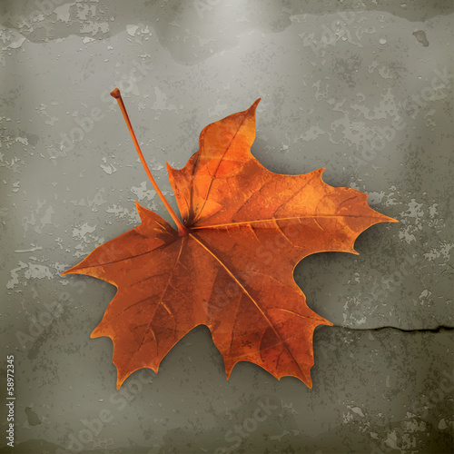 Maple leaf old style vector
