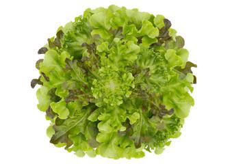Circle lettuce background