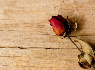 Single dried rose on old wooden background. Vintage style.