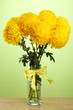 bright yellow chrysanthemums in glass vase, on green background