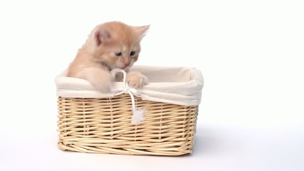 Playful kitten in the basket playing with a bow