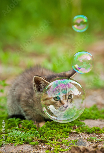 Little kitten and soap bubbles