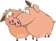 Two pigs Cartoon