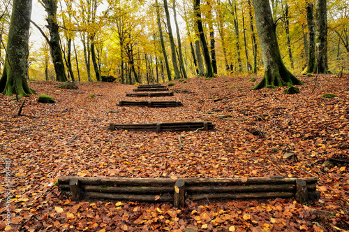 autumn forest with wooden stairs