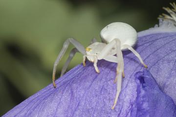 white spider on leaf
