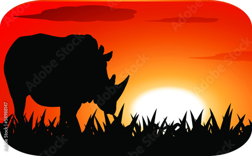 Rhinoceros with sunset