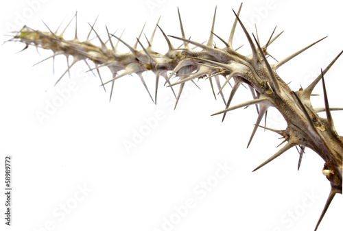 Close Up Of Twig Of Sharp Prickly Thorns