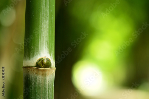 The bamboo in nature © PathomP
