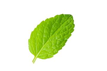 fresh mint leaves on white
