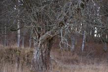 Vieil arbre ne