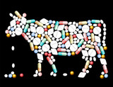 Tablets Pills Cow