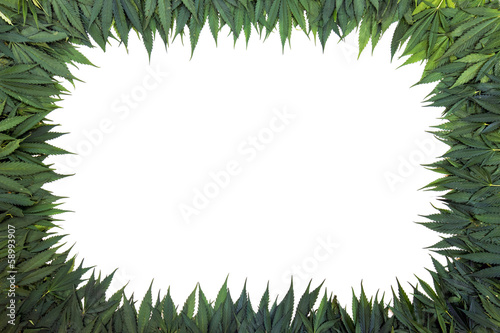 marijuana frame with white background