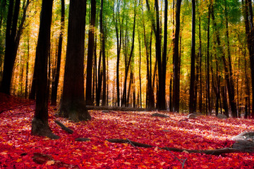 Forest in autumn with golden light