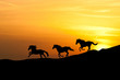 Galloping wild horses. Horse silhouette against the sky.