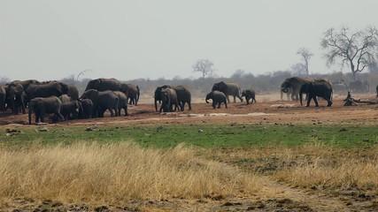 Elephants ,Namibia,Etosha NP
