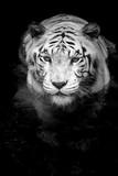 White Tiger - 59008729