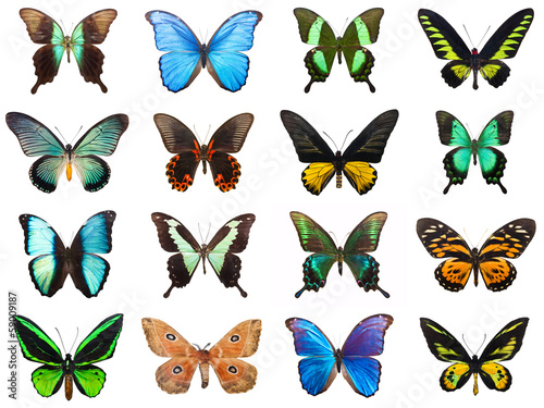 Deurstickers Vlinder Tropical butterflies
