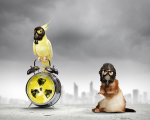 Ferret and parrot in gas masks