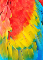 Parrot feathers, exotic texture
