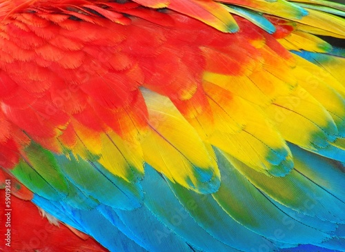 Spoed canvasdoek 2cm dik Textures Parrot feathers, red and blue exotic texture