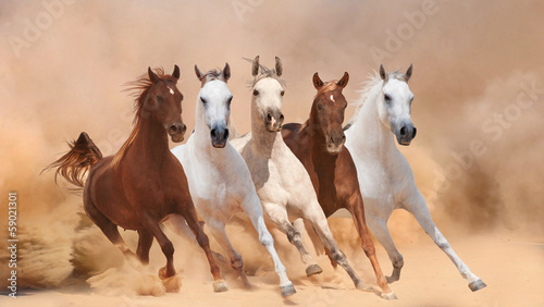 Horses in dust - 59021301