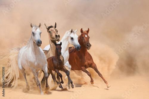 Horses in dust - 59021308