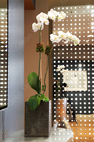 White orchid in vase on side table