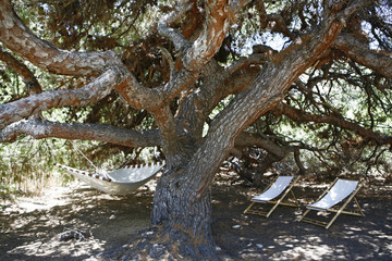 Hammock and chairs under old gnarled shade tree