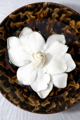 White water lilly in bowl