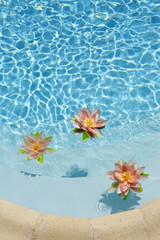 Lotus flowers in blue water