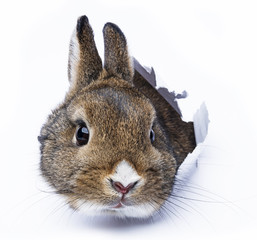 rabbit looks through a hole in a paper