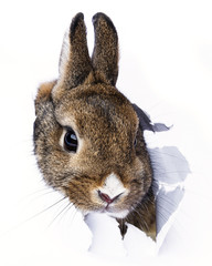 baby rabbit looks through a hole in a paper
