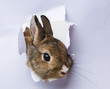 a little rabbit looks through a hole in paper