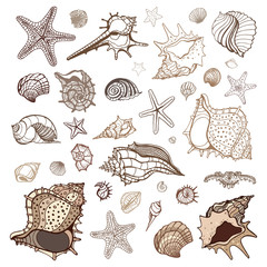 Sea shells collection.
