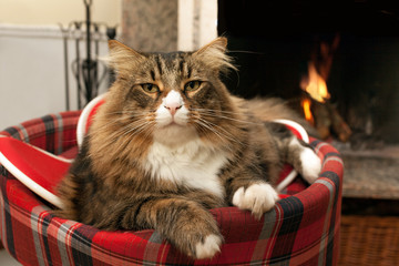 Cat Sitting In Front Of Fireplace