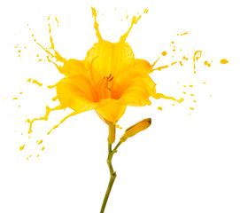 yellow flower splashes