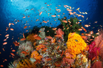 Colorful reef,Raja ampat,Indonesia