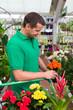 mann sucht topfblumen aus