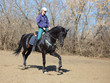 Beautiful young blond woman cantering black dressage horse