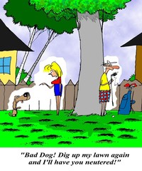 Dog dug up lawn