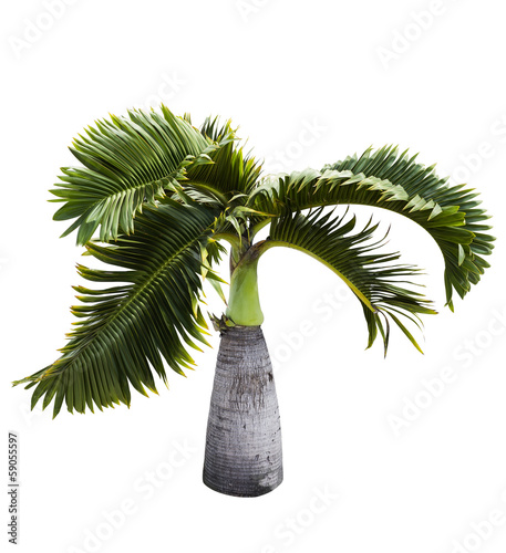 Keuken foto achterwand Palm boom Bottle Palm tree