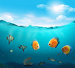 Fishes in the tropical sea.