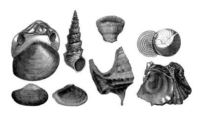 7 Prehistoric Fossils