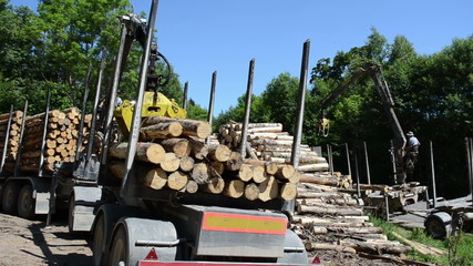 heavy equipment working in the forest  with cut logs