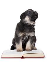 reading puppy