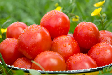 Fresh ripe tomatoes in a bowl on the grass