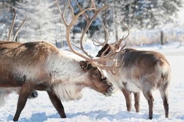 rennes en hiver